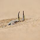 crab eyes sticking out of the sand by Flux Photography