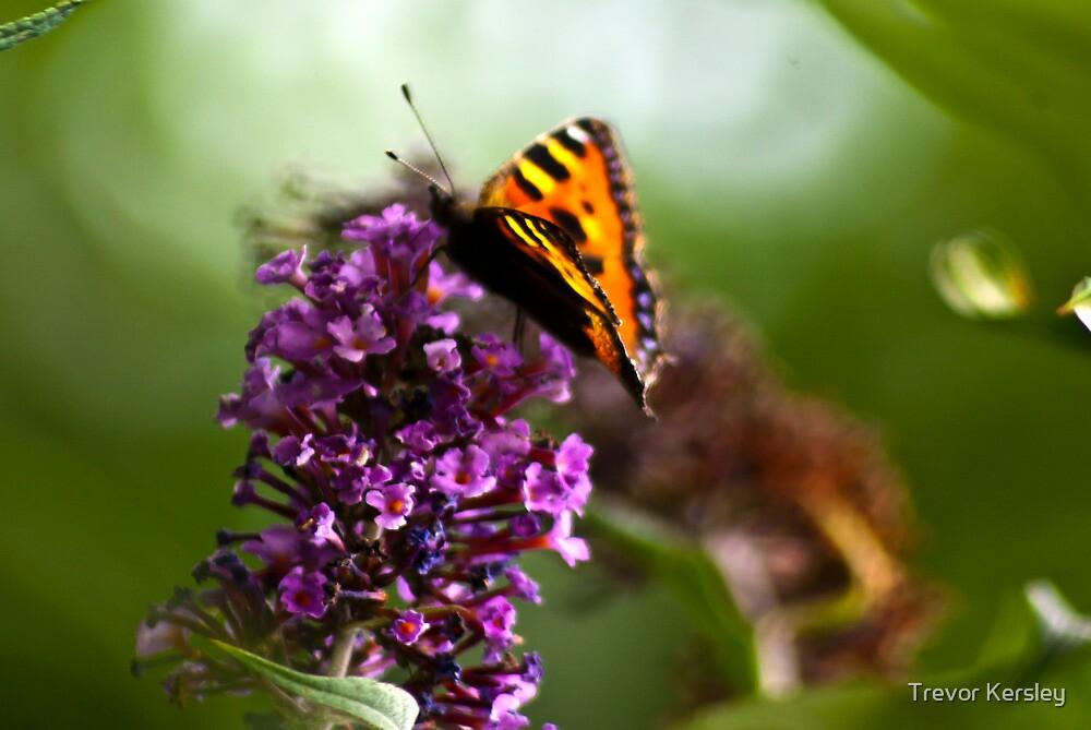 Butterfly #1 by Trevor Kersley