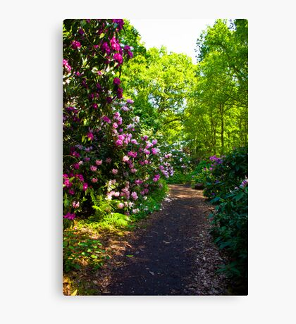 Flower Path Canvas Print