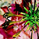 Photoshopped Flower 1 by Yvonne Carsley