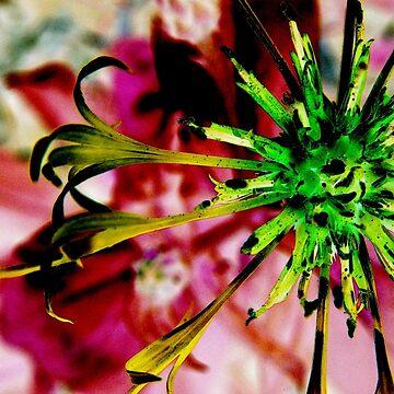 Photoshopped Flower 1 by yvonnecarsley
