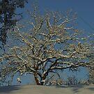 Winter Oak by marens