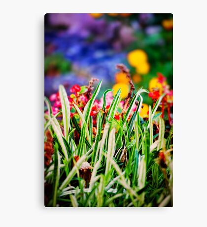 Colorful Grass Canvas Print