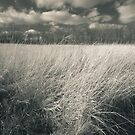 A Landscape From Childhood Memories by MLabuda