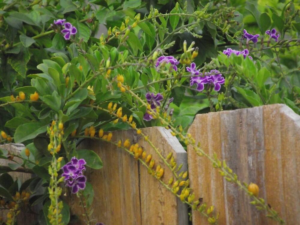 Arbustos que estallan en color para la caída | Ganadores probados