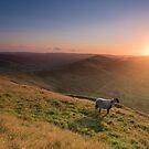 Sunrise of the Lambs by Jon Bradbury
