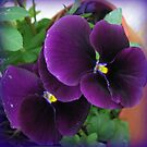 Purple Velvet - Pansies with Raindrop Jewels by BlueMoonRose