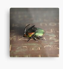 Horned Scarab Metal Print