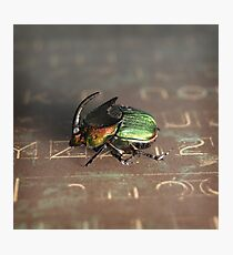 Horned Scarab Photographic Print