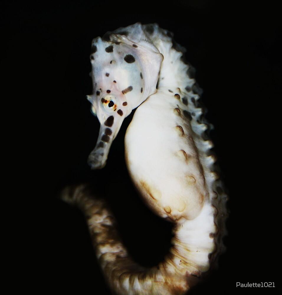 White Sea Horse by Paulette1021