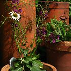 Chimney Pots, Echinacea & Verbascum by wiggyofipswich