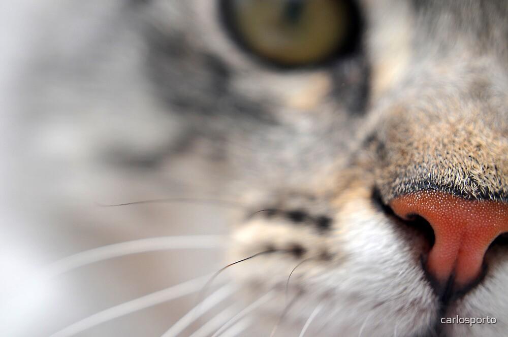 Sniff-Sniff by carlosporto