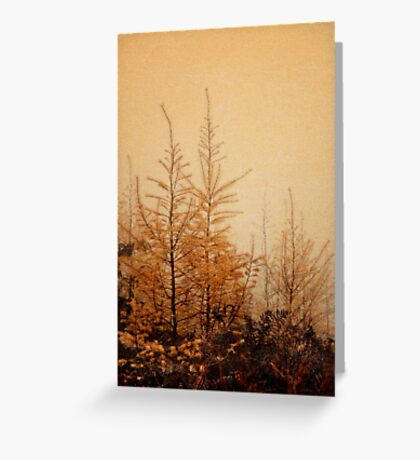 Little Larches Greeting Card