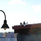 birds. by Caroline Pugh