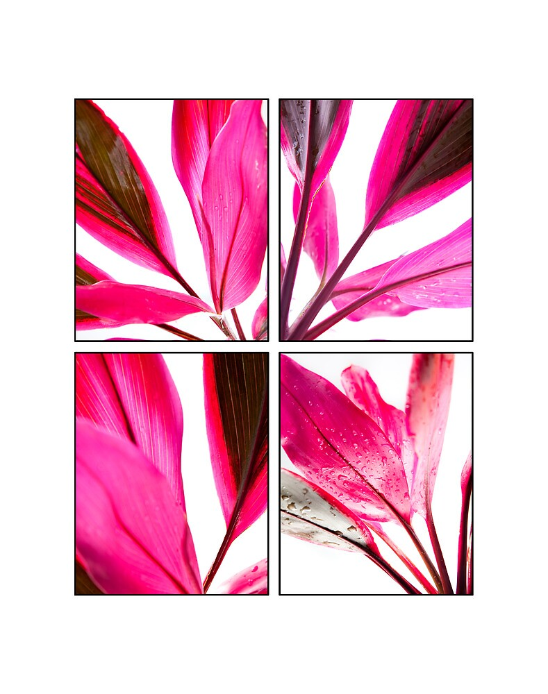 Red Cordyline Collage  by islandreflectns