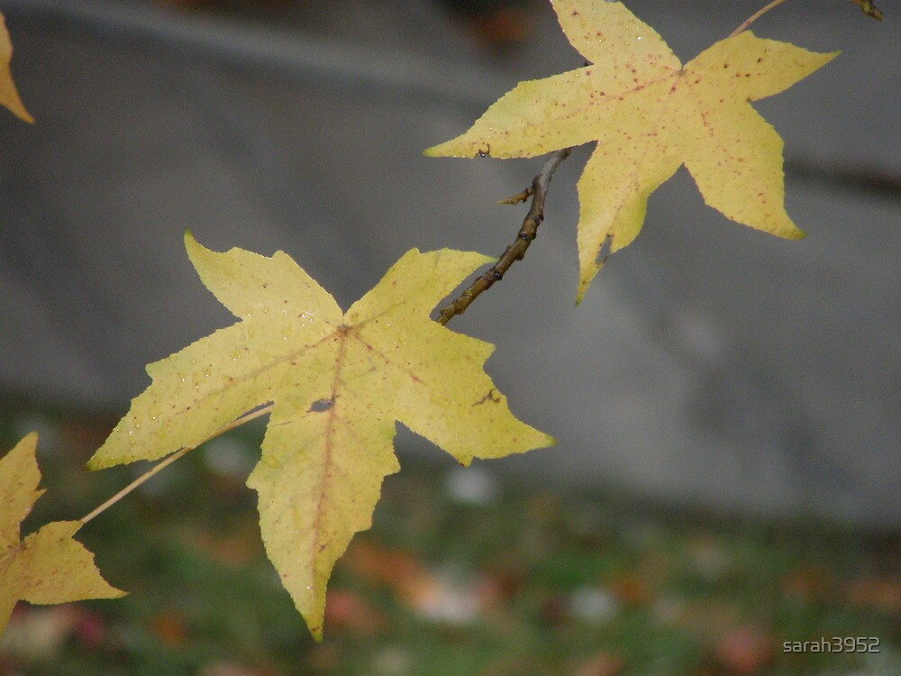 Leaf Litter by sarah3952