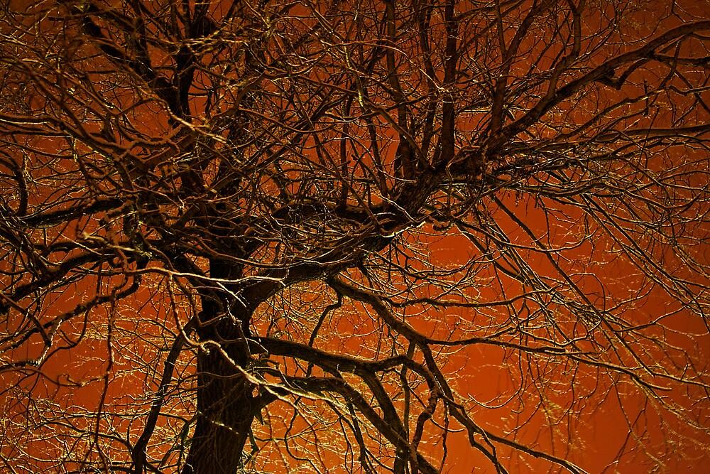 Winter Night Willow by Jeff  Galbraith