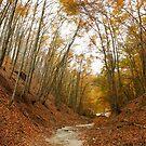 Autumn Valley by demigod