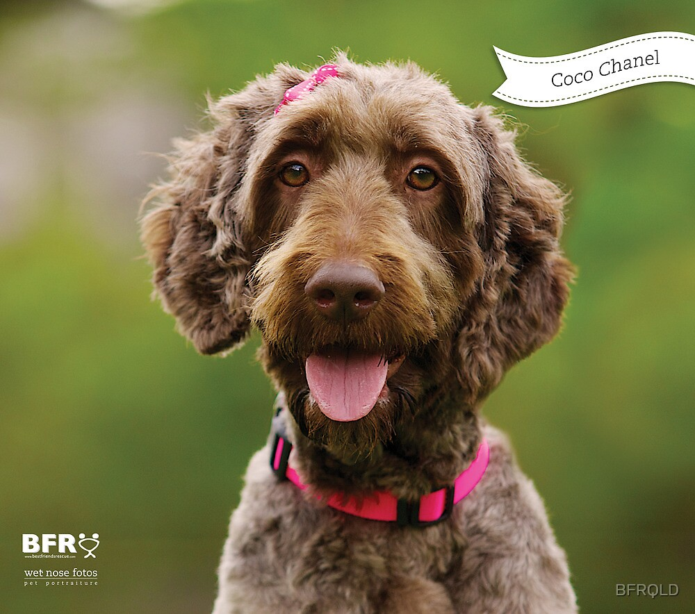 Coco Chanel :: by Wet Nose Fotos by BFRQLD