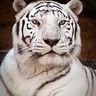 """""""Eye of the Tiger"""" - white bengal tiger by ArtThatSmiles"""