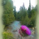 Thistle with Bee by Mountain Stream by Malinee Ganahl