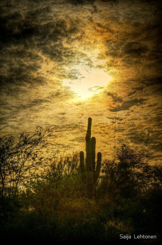 The Saguaro  by Saija  Lehtonen