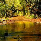 Ozark Stream Crossing by NatureGreeting Cards ©ccwri