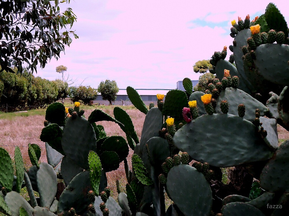 flowers are(cactus)   by fazza