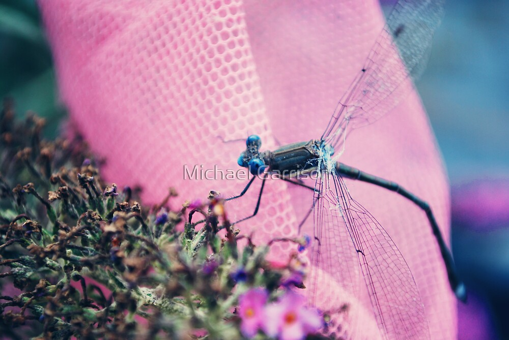 Dragonfly 1 by Michael Garrison