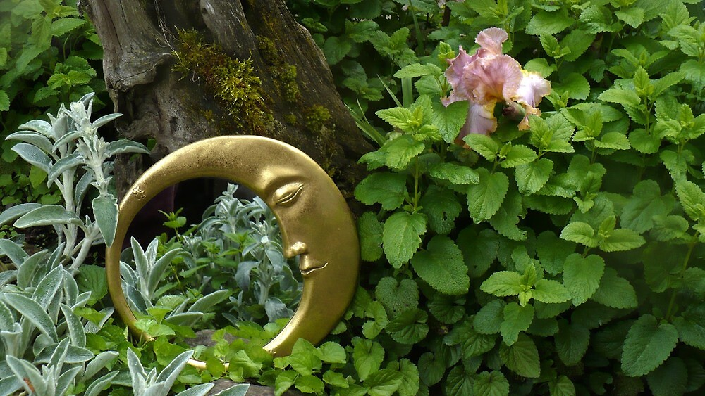 Moon Mirror - Reflection In A Garden by ShantiMikel