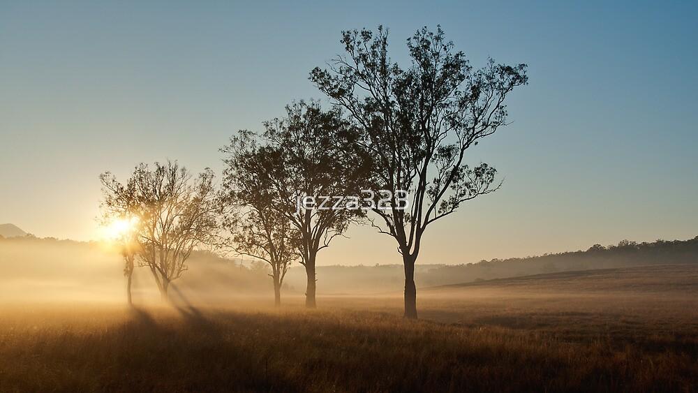 Fog Rays Through the Trees by jezza323