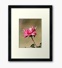 Cold Curl Framed Print