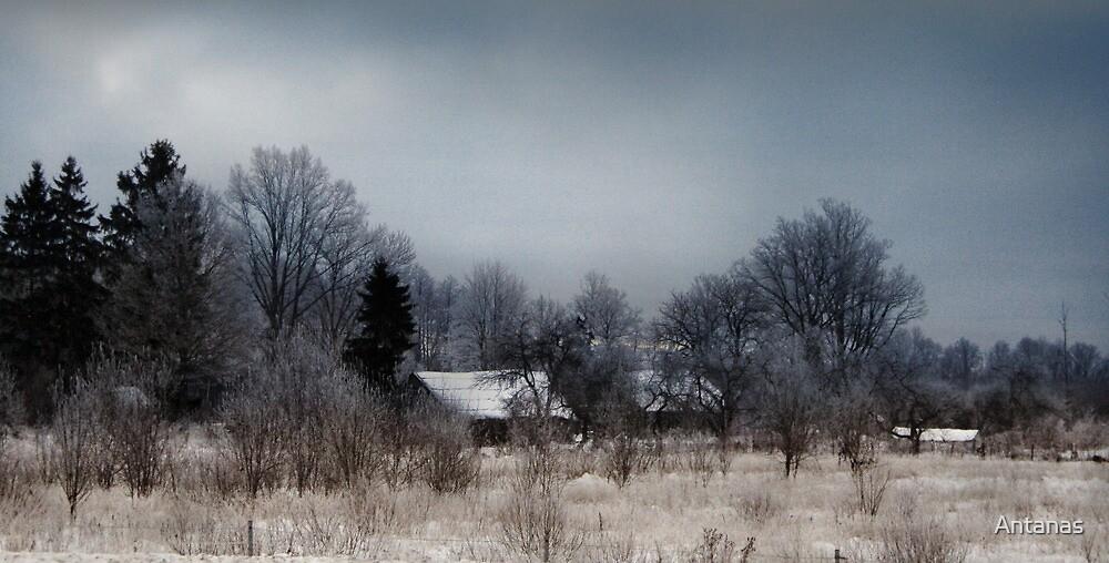 Silent Christmas by Antanas