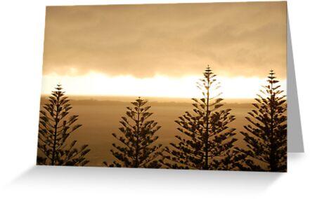 Morning light by elbladeo