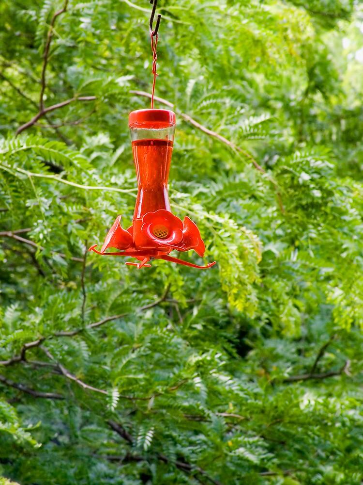 Humming Bird Feeder by Joy  Rector