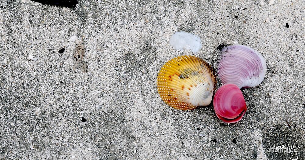 Shells <3 by mariamejia2