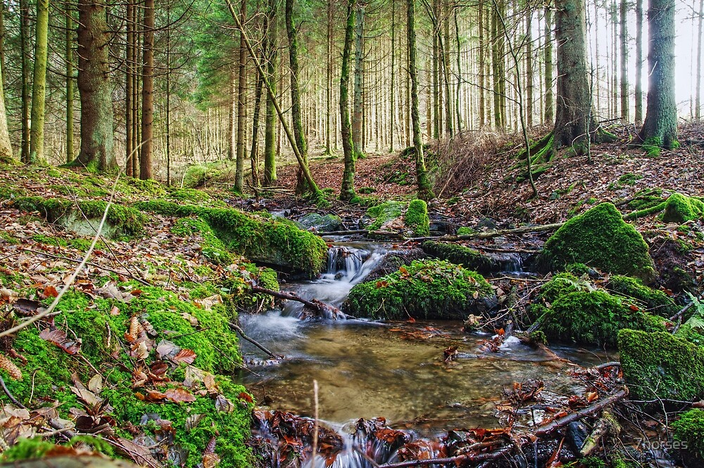 Little creek in the Belgian Ardennes in HDR by 7horses