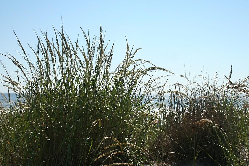 Narragansett Dunes- Beach Grass by cindyh