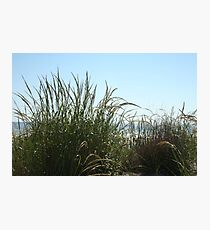 Narragansett Dunes- Beach Grass Photographic Print