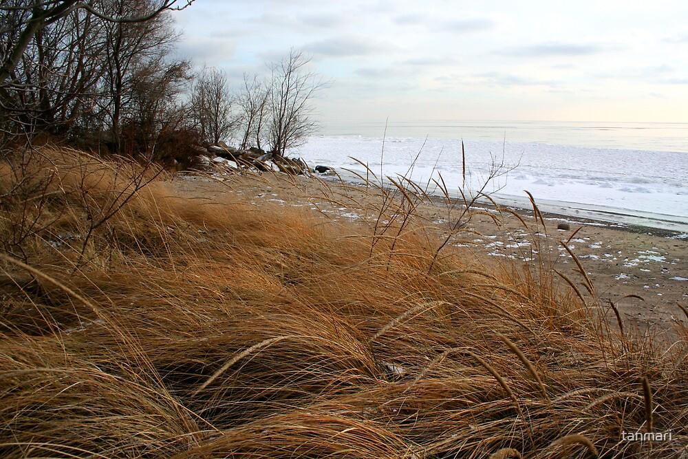 Beach grass in winter by tanmari