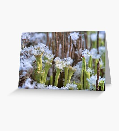 Winter lichens Greeting Card