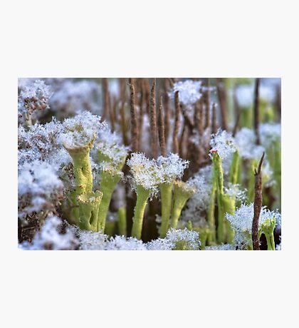 Winter lichens Photographic Print