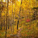Colors of Autumn by Reese Ferrier