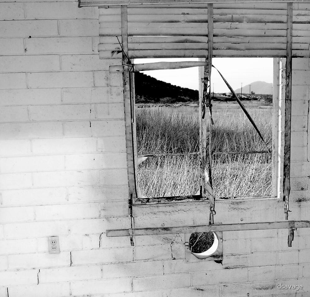 window by dsavage