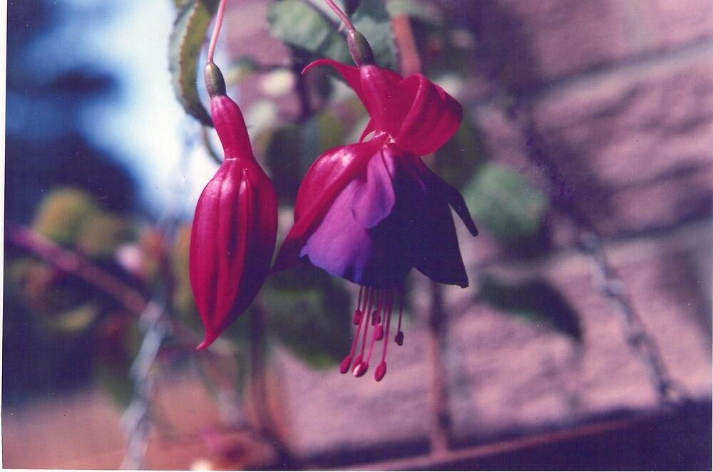 bell flower  by david  stiglmayer