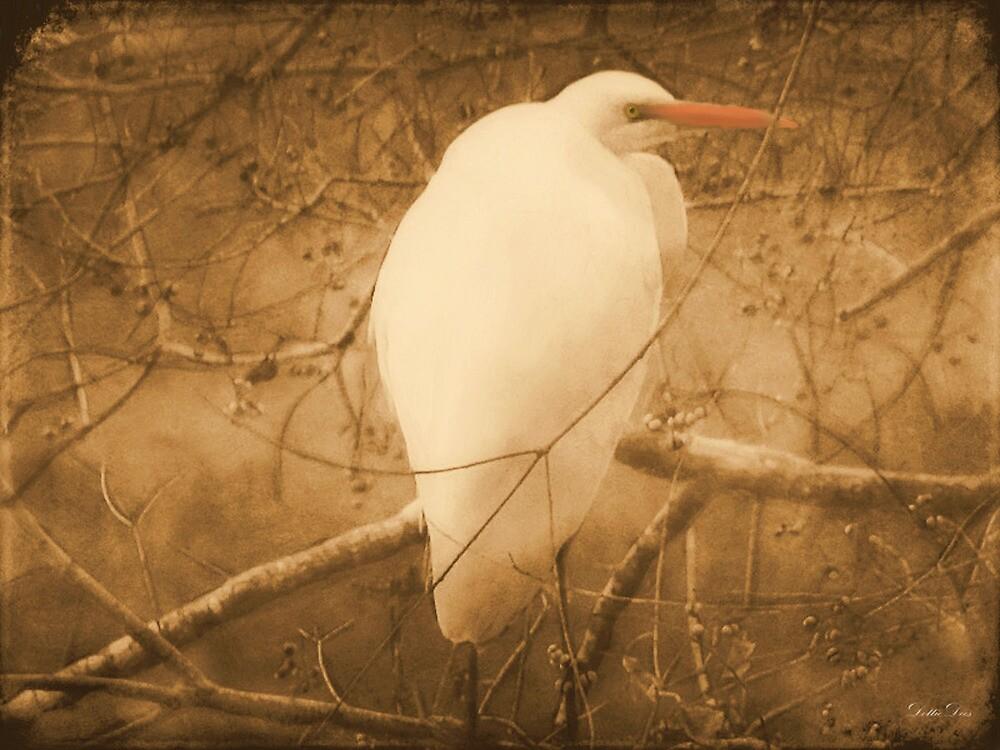 Egret In A Tree by DottieDees