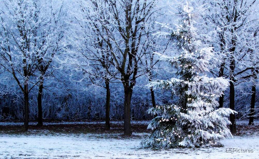 Blue Forest Christmas Tree by LSPictures