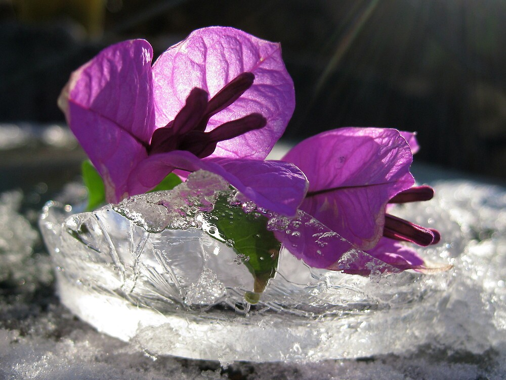 Ice,Ice,Baby by mrvica