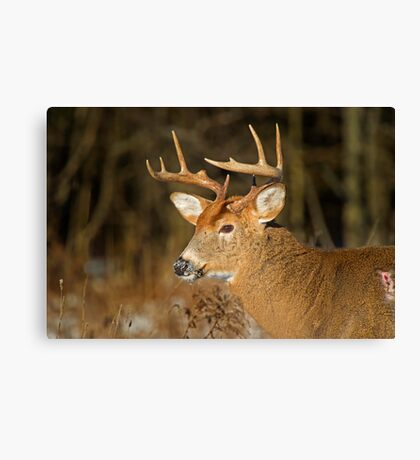 Profile of a Buck  Canvas Print