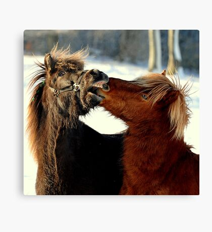 Never look a gift horse in the mouth Canvas Print